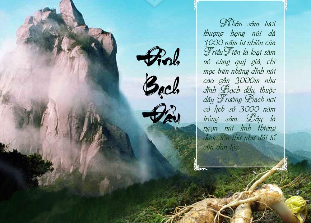nhân sâm tự nhiên 1000 năm tuôi