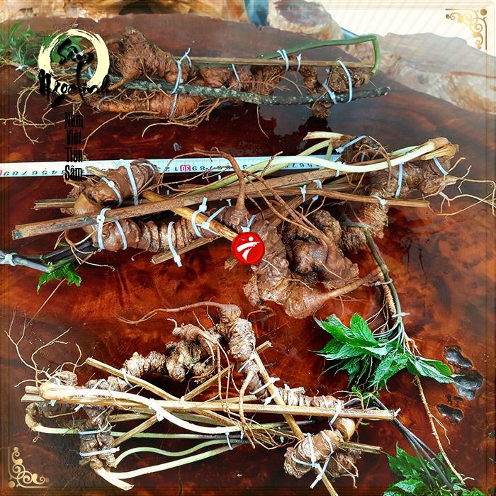 2 củ sâm Ngọc Linh rừng quý hiếm (mỗi củ khoảng 60 năm tuổi, dài 60 phân)