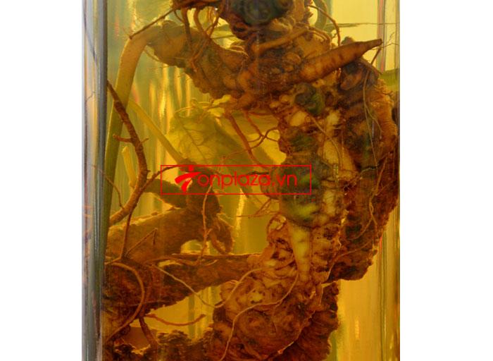 Bình ngâm sâm Ngọc Linh dung tích 20L (2.7kg) NS308 6