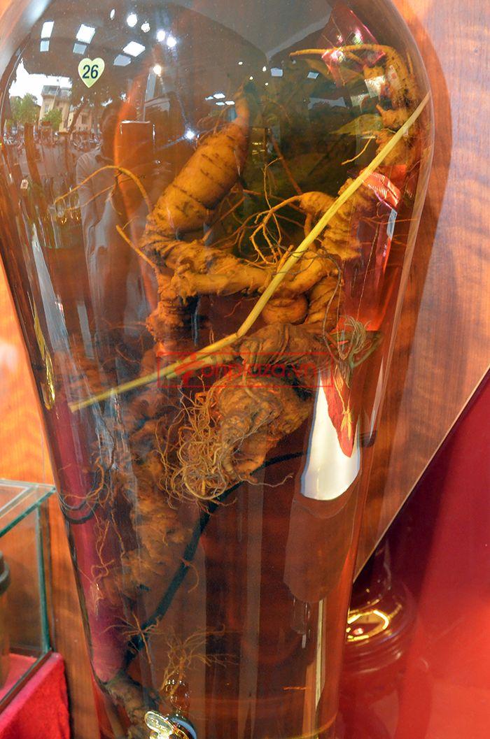 Bình ngâm sâm Ngọc Linh tự nhiên 1.65kg 3