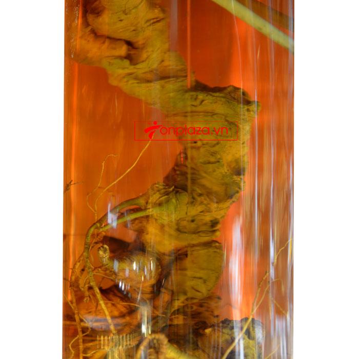 Bình sâm Ngọc Linh hình trụ 20 lit NS327 (loại 10 củ/kg) NS327 6