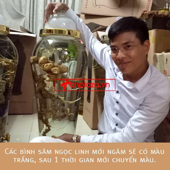 Bình ngâm sâm Ngọc Linh tươi phong thủy loại 2kg/củ 2