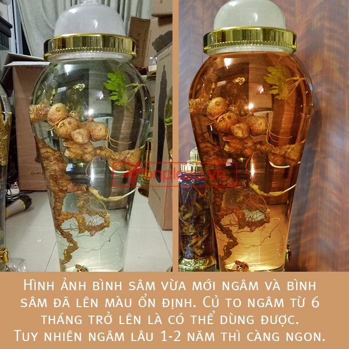 Bình ngâm sâm Ngọc Linh tươi phong thủy loại 2kg/củ 4