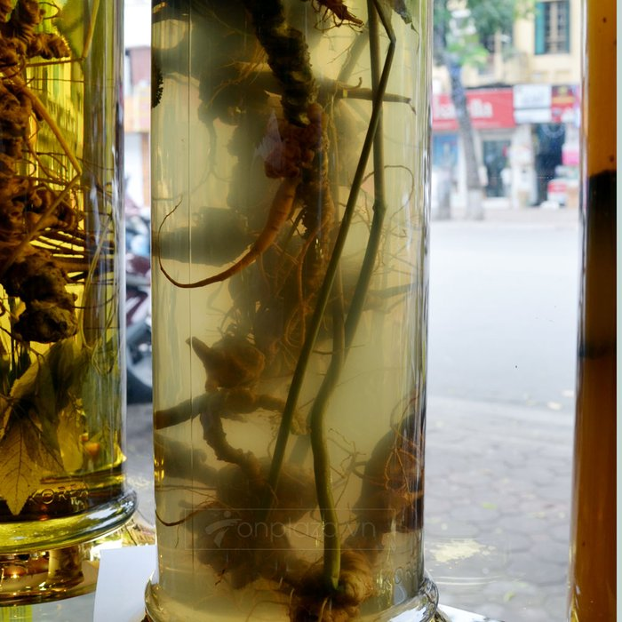 Bình rượu sâm Ngọc Linh 16L NS309 2