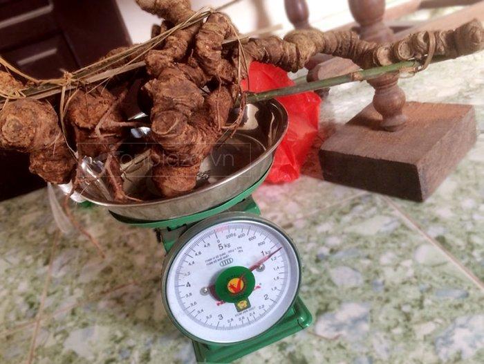 Bình sâm Ngọc Linh 28L (1 củ - 1.1kg) NS306 4