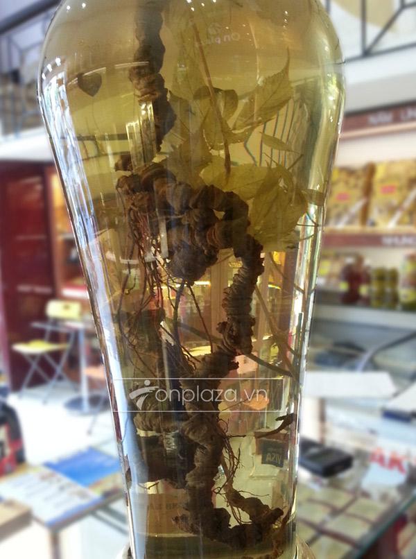 Bình sâm ngọc linh (loại 2,4kg/1củ) NS301 2