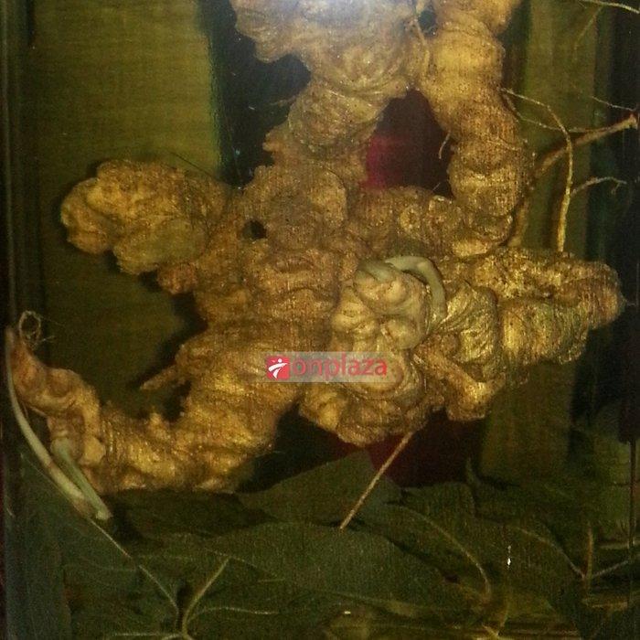 Bình sâm Ngọc Linh 100 năm tuổi ( loại 1,9kg/1 củ) NS186 1