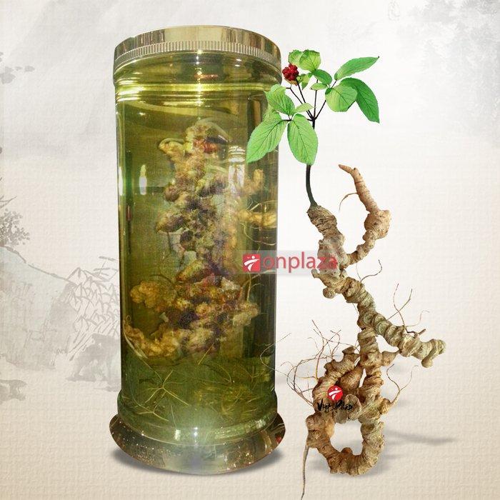 Bình sâm Ngọc Linh 100 năm tuổi ( loại 1,9kg/1 củ) NS186 2
