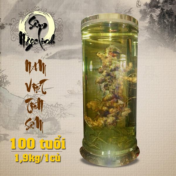 Bình sâm Ngọc Linh 100 năm tuổi ( loại 1,9kg/1 củ) NS186
