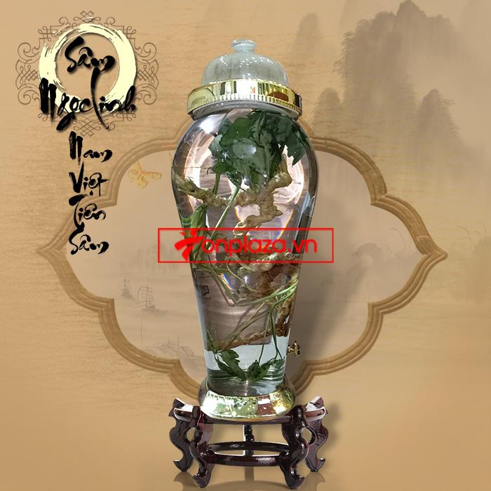 Bình  củ nhân sâm Ngọc Linh 100 năm tuổi loại 1.5kg/củ