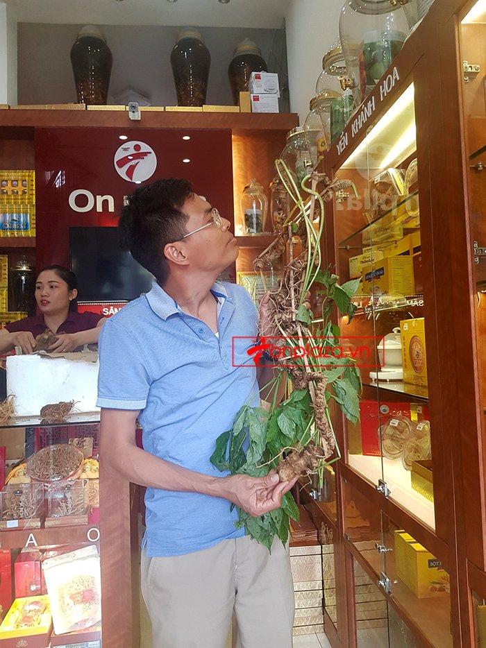 Bình sâm Ngọc Linh rừng tự nhiên 41 lít 9