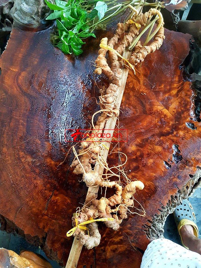 Bình sâm Ngọc Linh rừng tự nhiên 41 lít 10