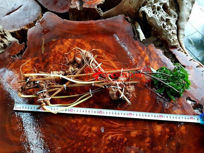 Bình sâm Ngọc Linh rừng tự nhiên 41 lít 12