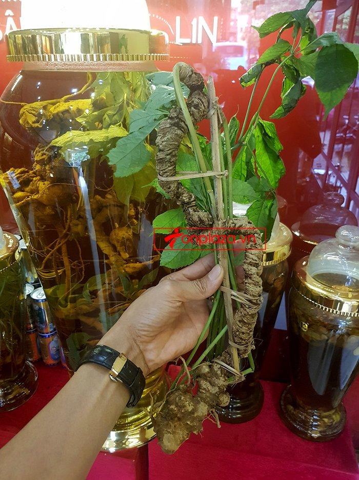 Bình sâm Ngọc Linh rừng tự nhiên 41 lít 13