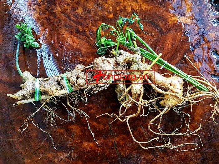 Bình sâm Ngọc Linh trồng cao cấp số 26 - thể tích lớn 41 lít 10