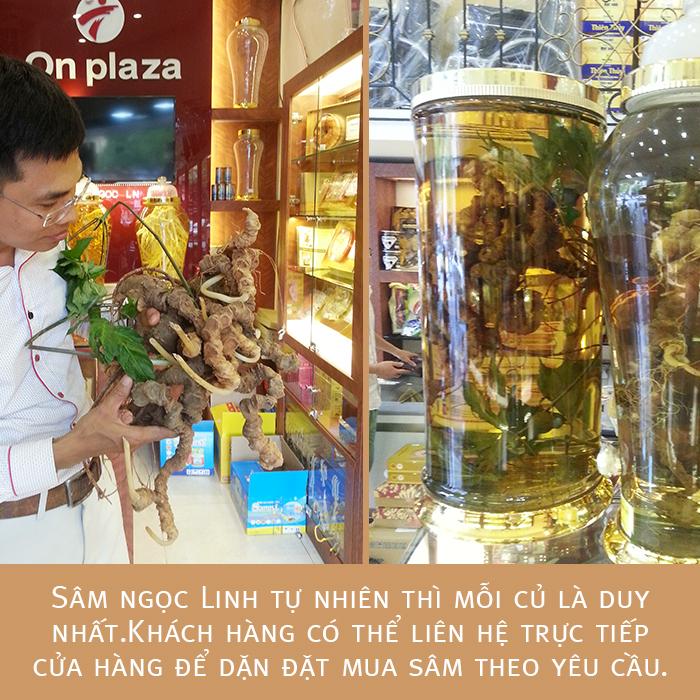Bình sâm ngọc linh tự nhiên quý hiếm loại 2.4kg/củ 2