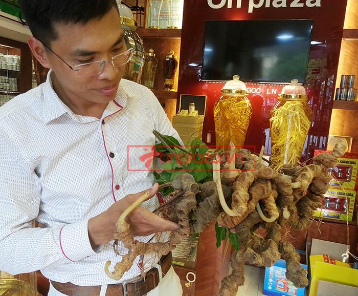 Bình sâm ngọc linh tự nhiên quý hiếm loại 2.4kg/củ 7
