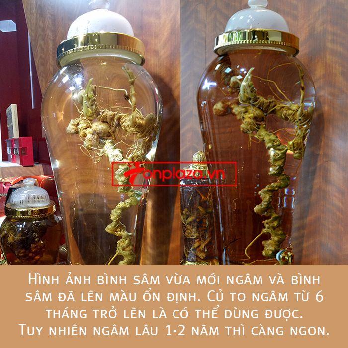 Một số hình ảnh chi tiết của sản phẩm Bình sâm Ngọc Linh tươi tự nhiên ngâm loại 1.9kg/củ 1