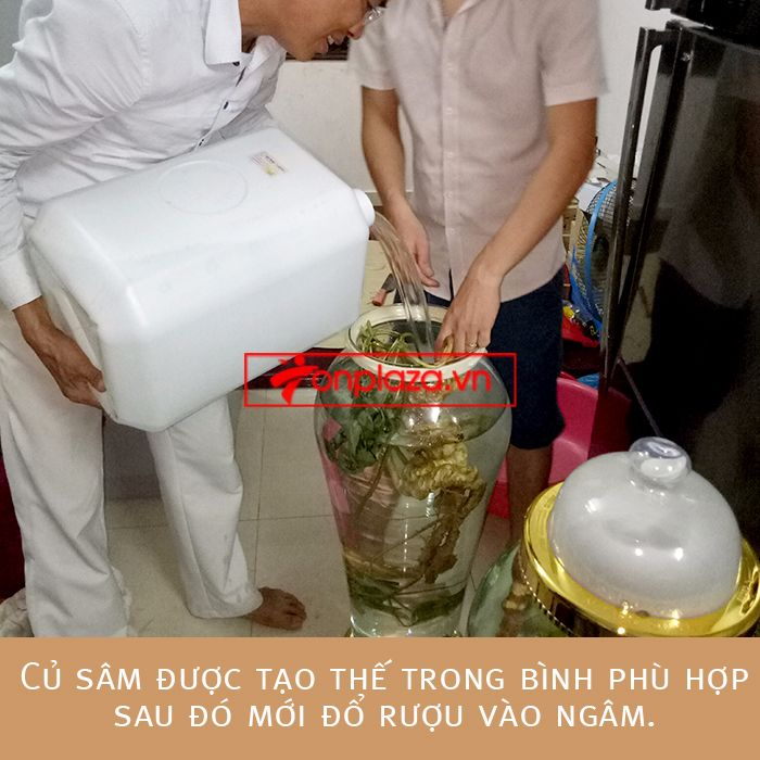 Một số hình ảnh chi tiết của sản phẩm Bình sâm Ngọc Linh tươi tự nhiên ngâm loại 1.9kg/củ 4