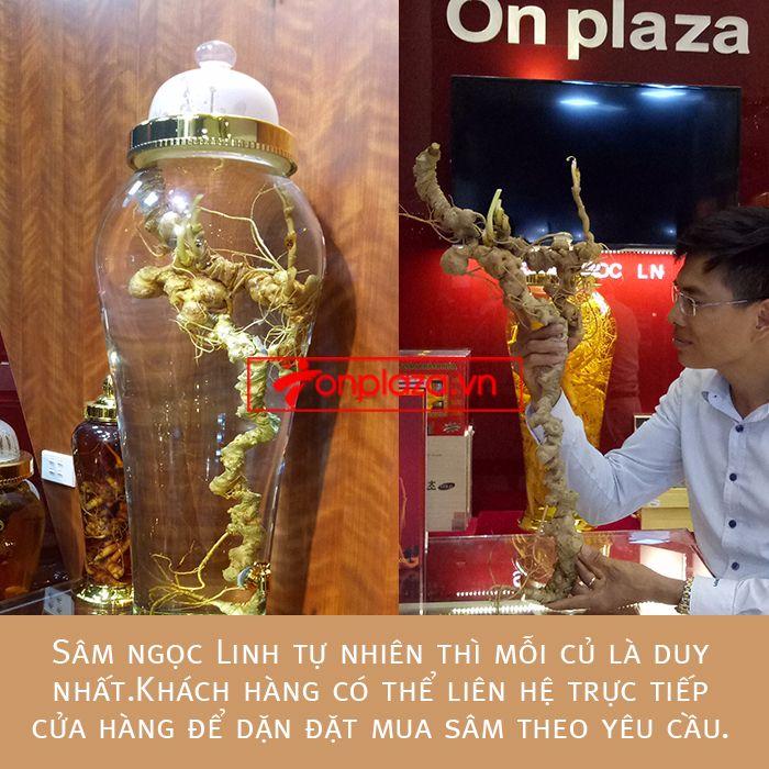 Một số hình ảnh chi tiết của sản phẩm Bình sâm Ngọc Linh tươi tự nhiên ngâm loại 1.9kg/củ 6