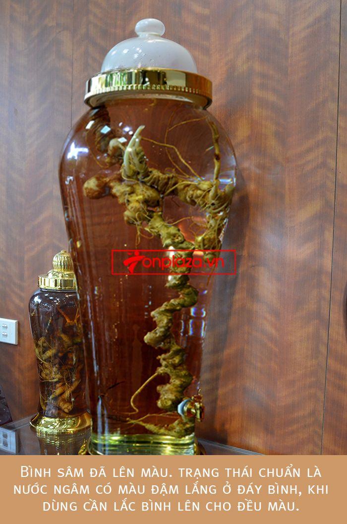 Một số hình ảnh chi tiết của sản phẩm Bình sâm Ngọc Linh tươi tự nhiên ngâm loại 1.9kg/củ 7