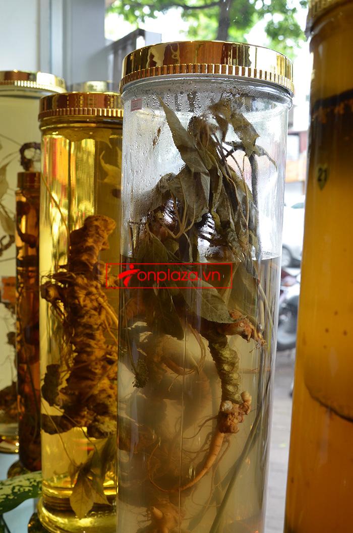 Các mẫu sâm ngọc linh khac hiện đang có tại cửa hàng 5