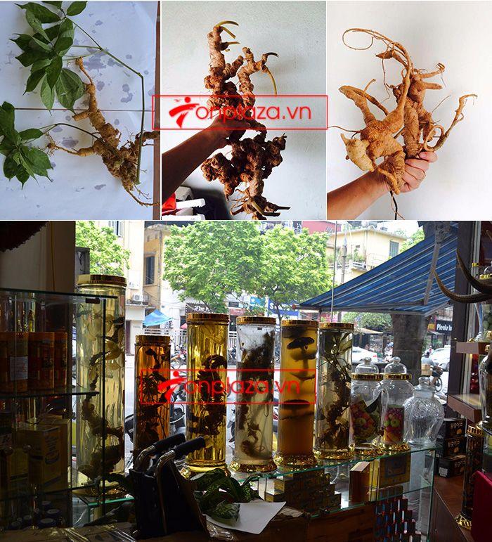 Một số hình ảnh về các sản phẩm sâm Ngọc Linh khác tại showroom 1
