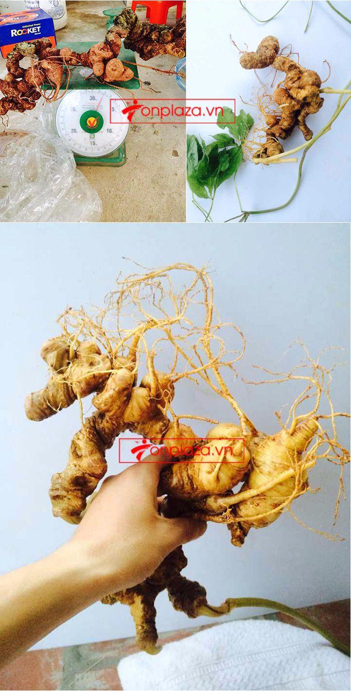 Một số hình ảnh về các sản phẩm sâm Ngọc Linh khác tại showroom 6
