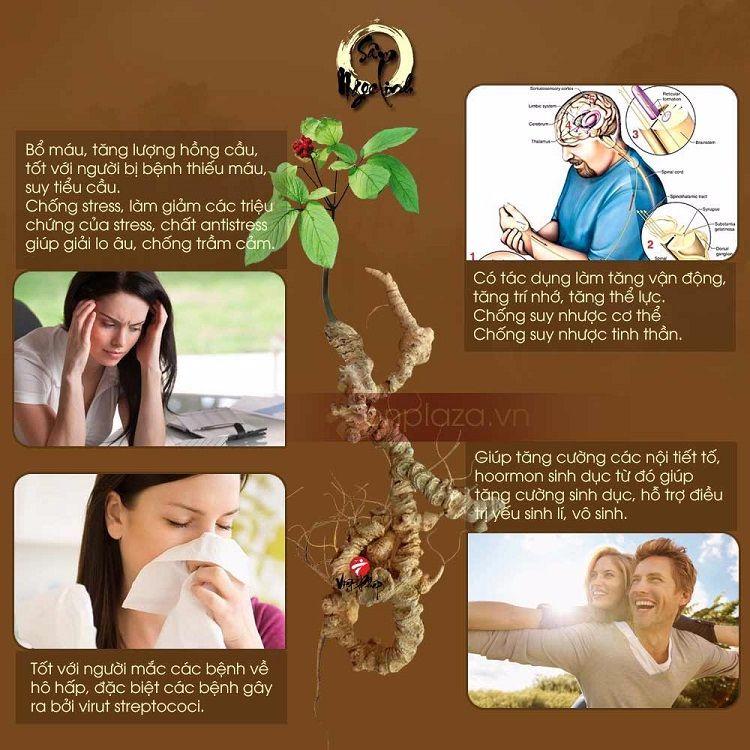 Những thành phần hóa học trong nhân sâm giúp chữa được nhiều nhóm bệnh
