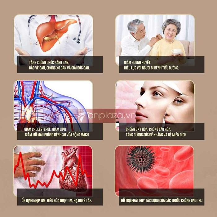 Giá trị sức khỏe của các saponin trong sâm Ngọc Linh