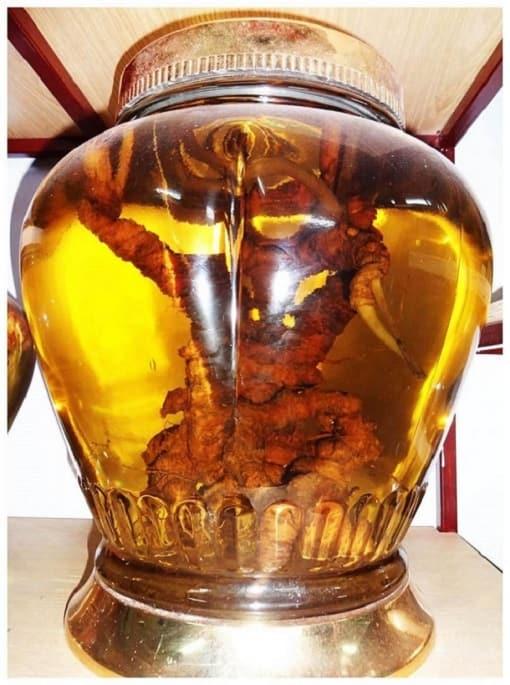 Bảo quản sâm ngọc linh bằng cách ngâm rượu