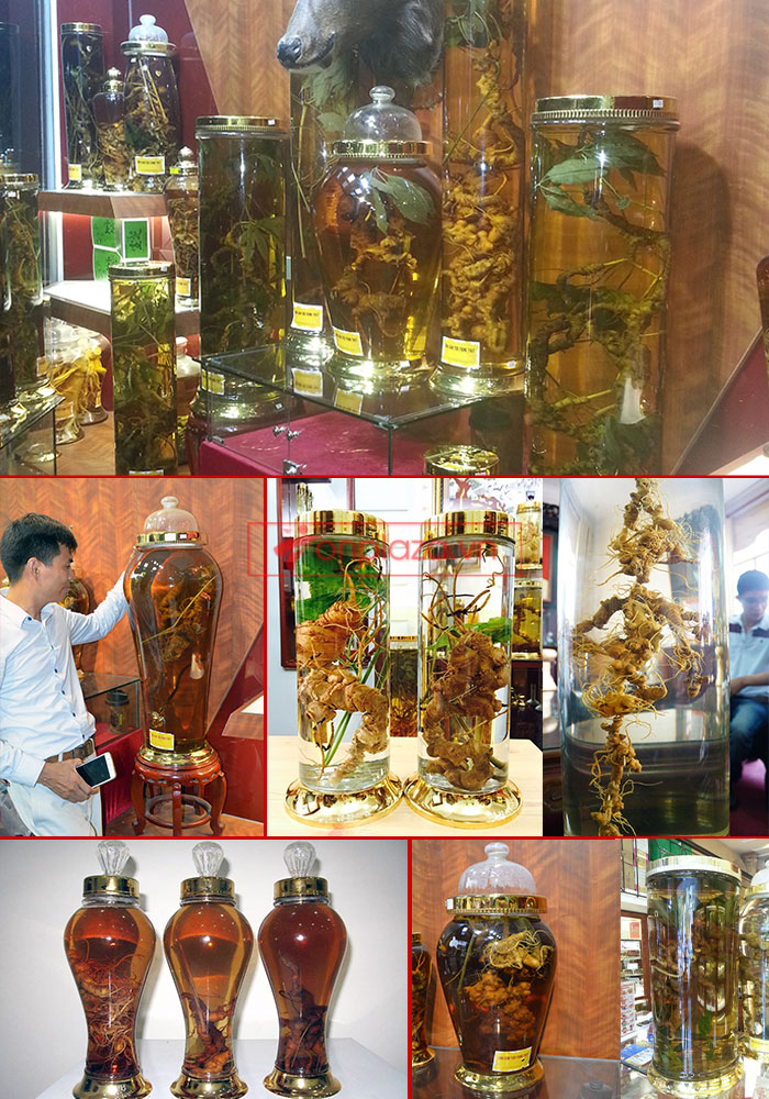 Một sồ hình ảnh sâm Ngọc Linh tại showroom Onplaza-Việt Pháp 1