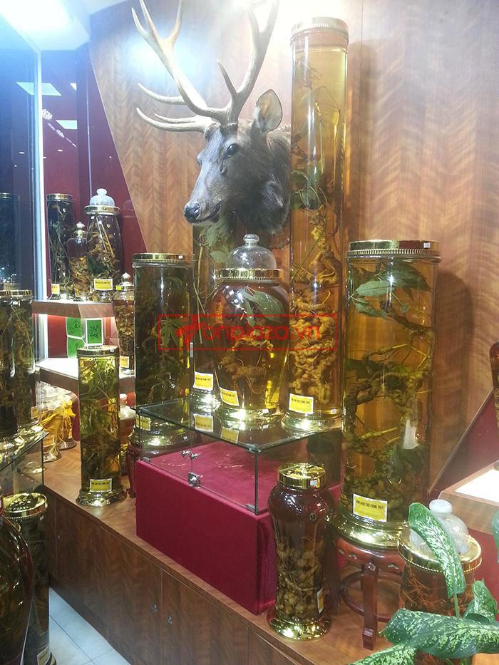 Một sồ hình ảnh sâm Ngọc Linh tại showroom Onplaza-Việt Pháp 2