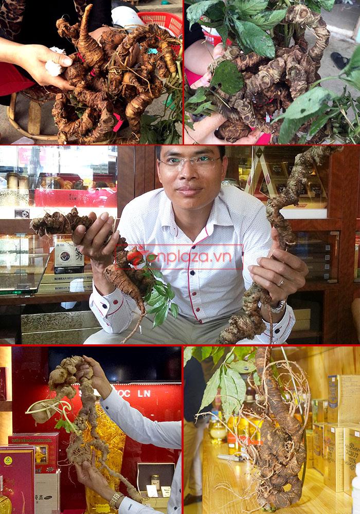 Một sồ hình ảnh sâm Ngọc Linh tại showroom Onplaza-Việt Pháp 4