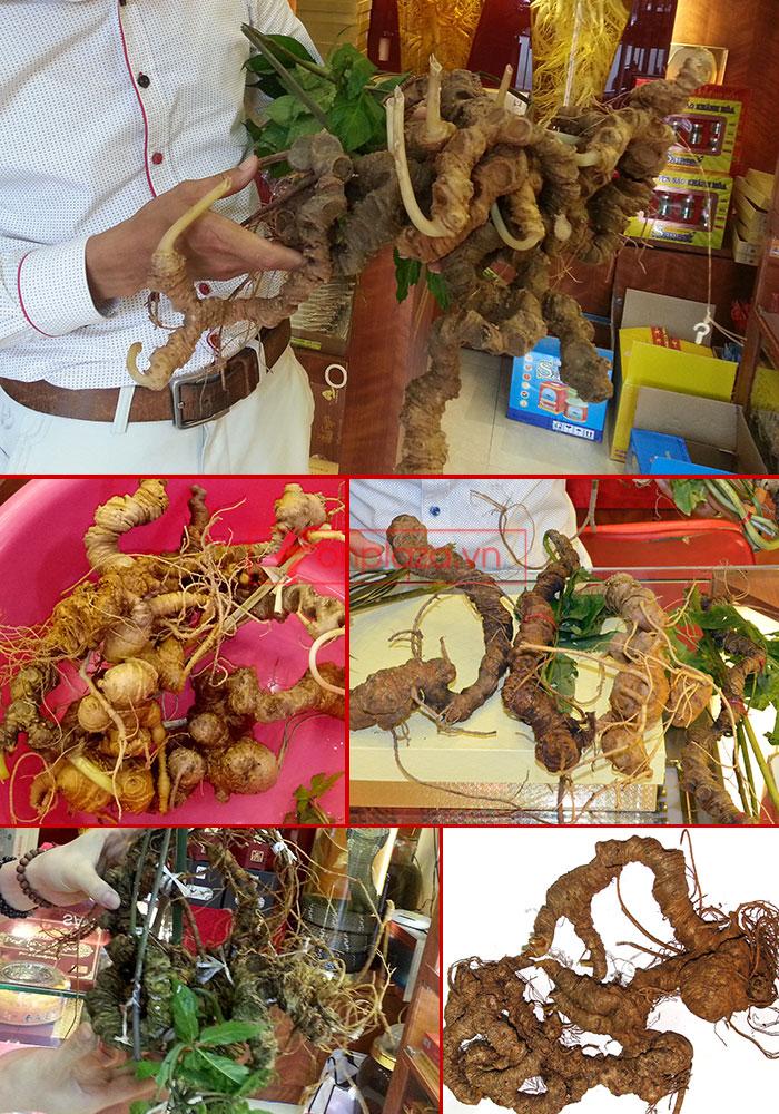 Một sồ hình ảnh sâm Ngọc Linh tại showroom Onplaza-Việt Pháp 5
