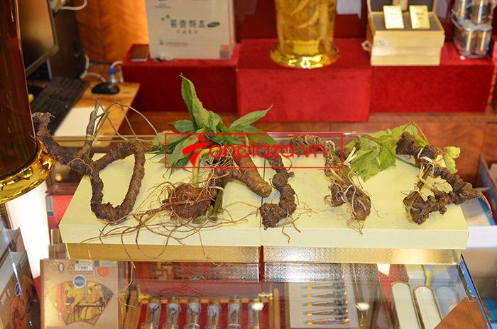 Một số hình ảnh sâm Ngọc Linh khác tại showroom 8