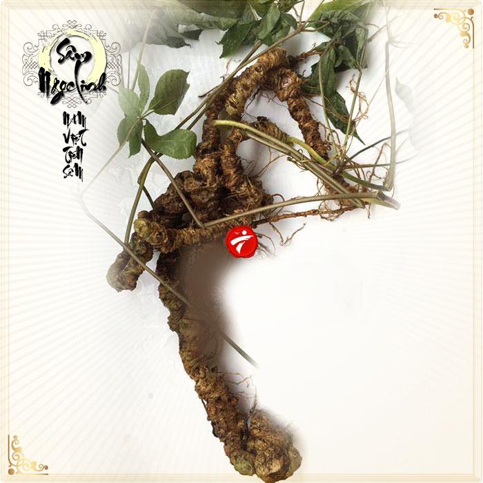 Sâm ngọc linh núi 75 năm tuổi loại 5 - 6 lạng 1 củ NS184