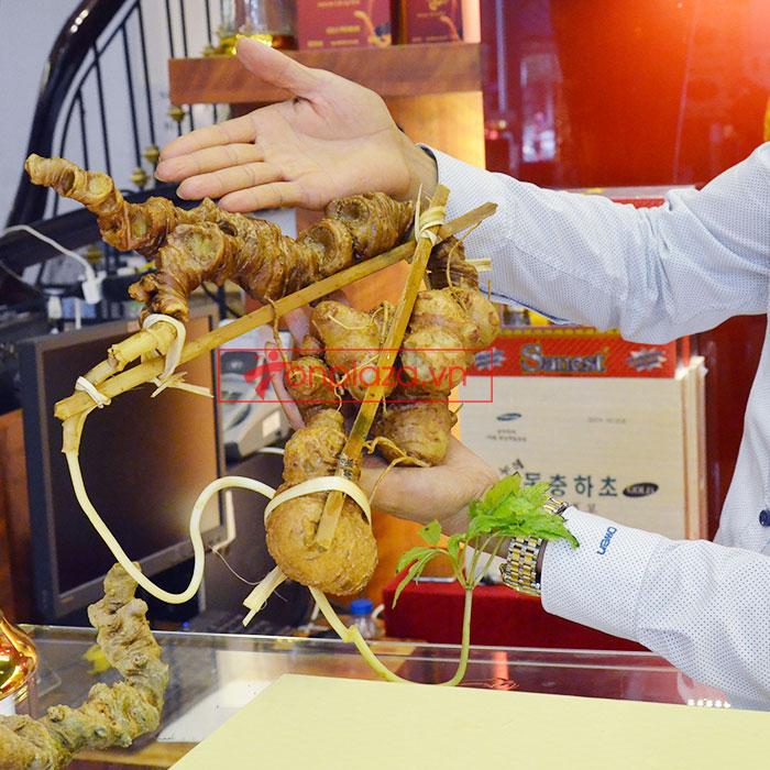 Sâm Ngọc Linh núi tự nhiên loại 1.13kg 1 củ tươi  2