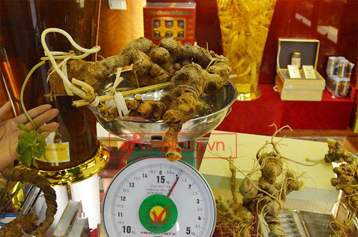 Sâm Ngọc Linh núi tự nhiên loại 1.13kg 1 củ tươi 7