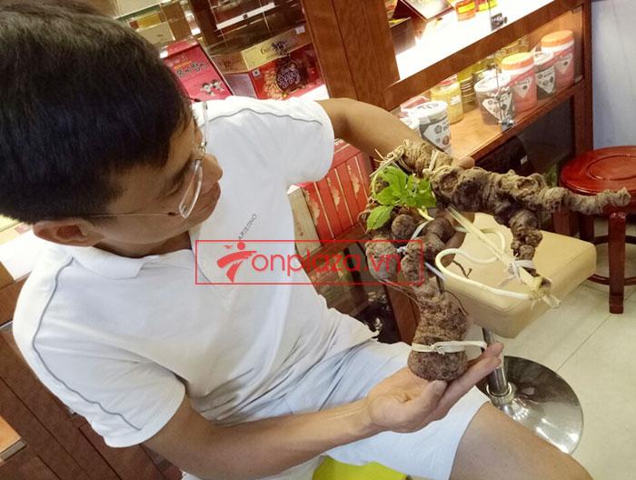 Sâm Ngọc Linh núi tự nhiên loại 1.13kg 1 củ tươi 9
