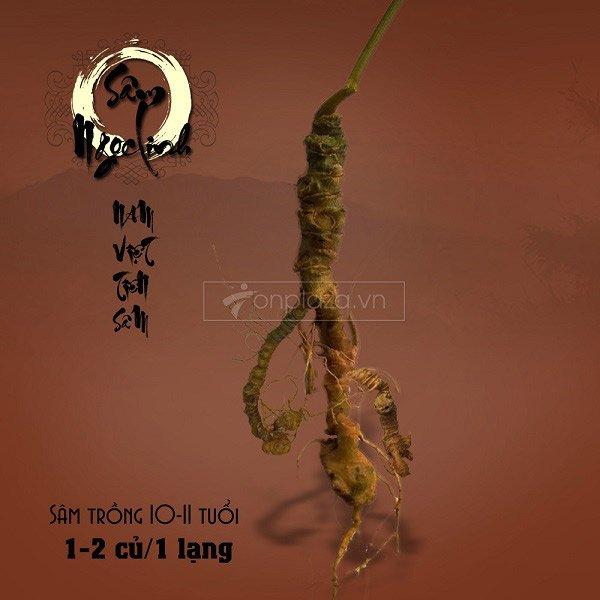 Sâm ngọc linh 11-15 năm tuổi 1 lạng 1-2 củ NS180