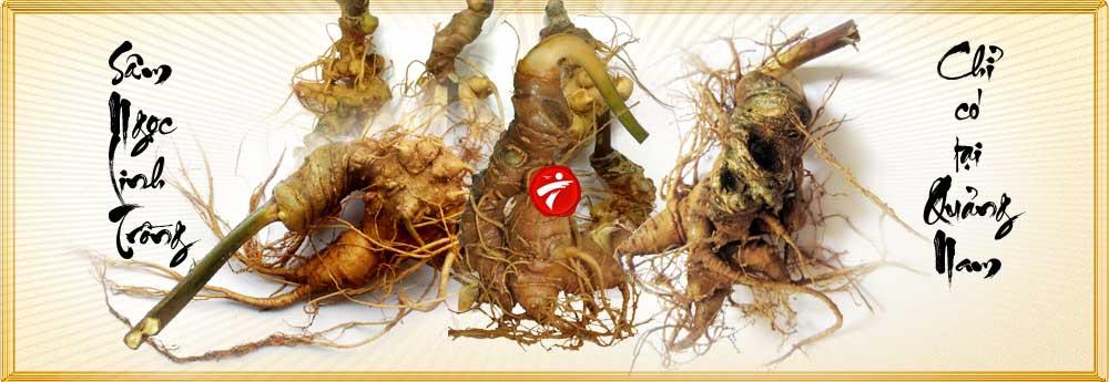 Sâm Ngọc Linh trồng loại 2- 5 củ 1 cân NS340 5