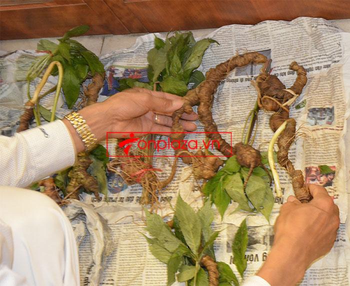 Sâm ngọc linh tự nhiên loại 10-20 củ 1 kg 2