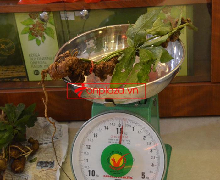 Sâm ngọc linh tự nhiên loại 10-20 củ 1 kg 6