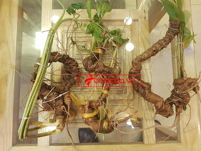 Sâm núi Ngọc Linh loại 5 củ / 1kg  2