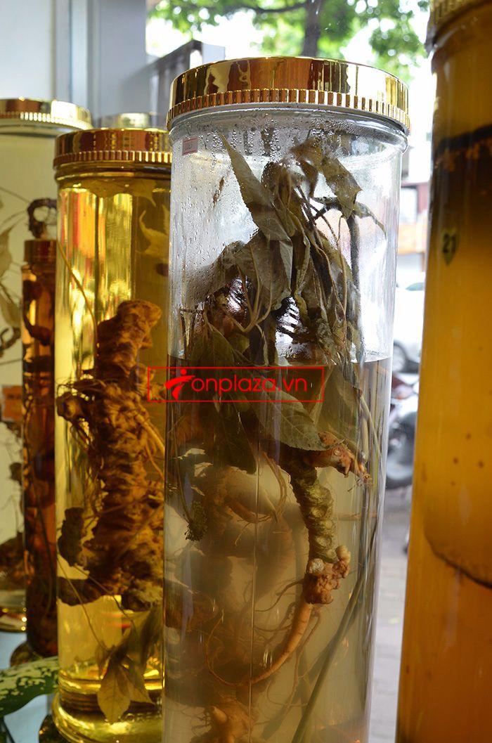 Một số hình ảnh trưng bày sâm ngọc linh tại showroom Onplaza Việt Pháp 1