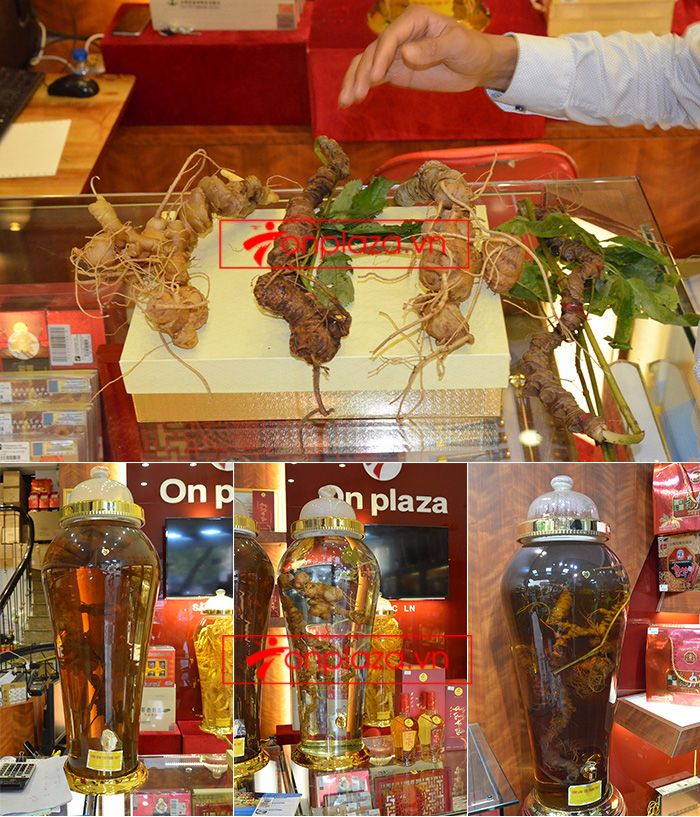 Một số hình ảnh trưng bày sâm ngọc linh tại showroom Onplaza Việt Pháp 2