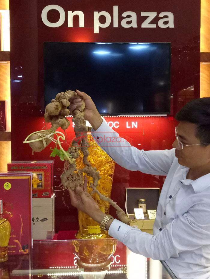 Một số hình ảnh trưng bày sâm ngọc linh tại showroom Onplaza Việt Pháp 5