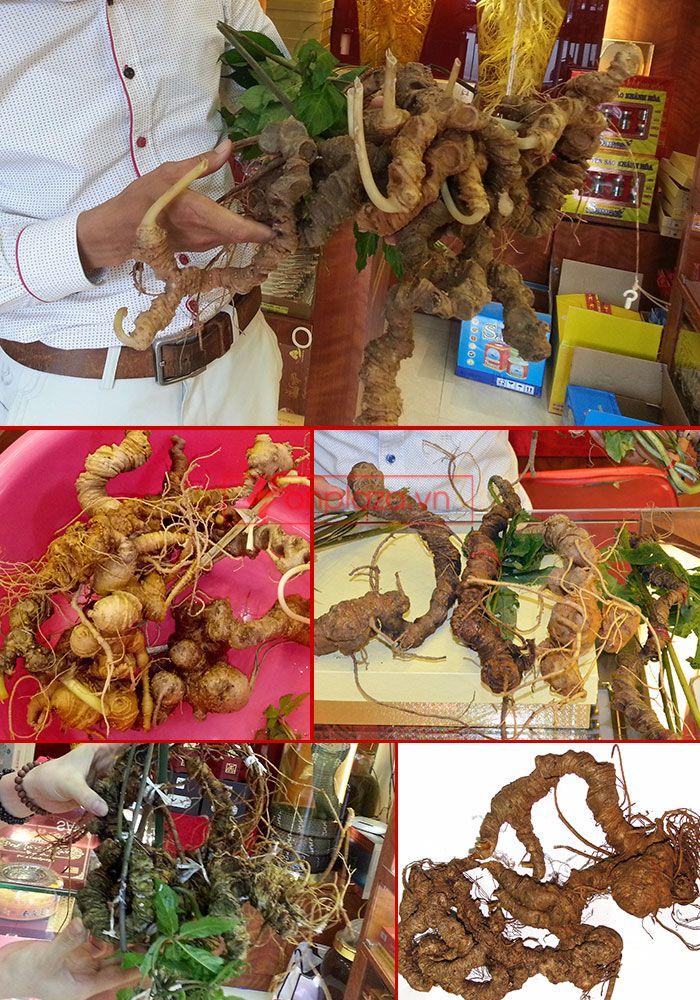 Một số hình ảnh trưng bày sâm ngọc linh tại showroom Onplaza Việt Pháp 8