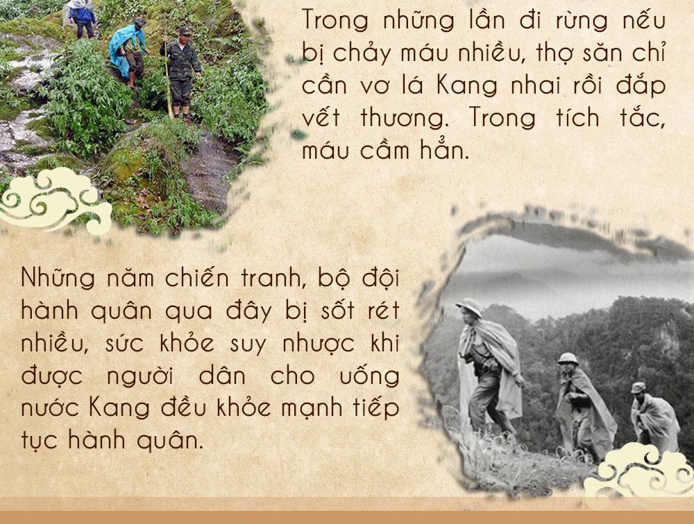 Sâm ngọc linh núi chính hãng - thiên nhiên